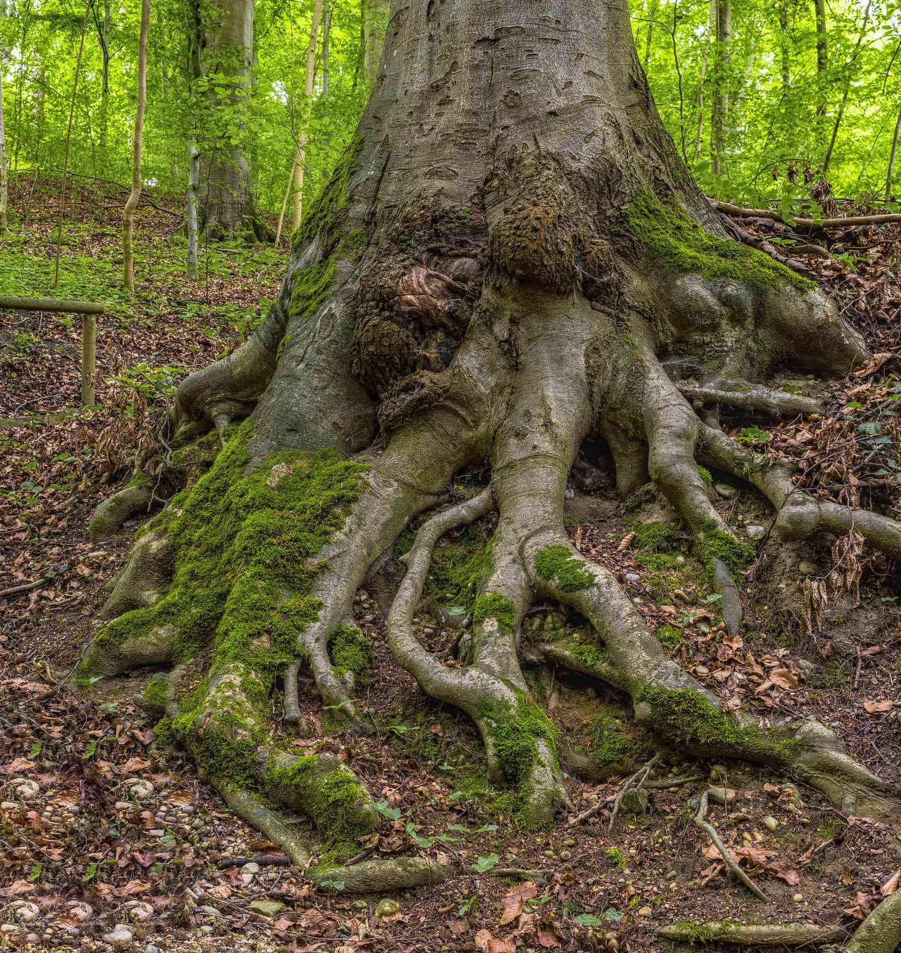 Ancrage : faire monter ses racines